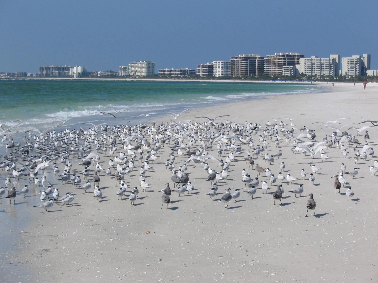 Florida's Gulf Coast - Sarasota Area
